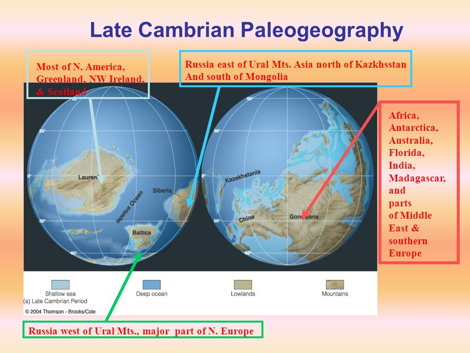 Late Cambrian Paleogeography Africa, Antarctica, Australia, Florida, India, Madagascar, and parts of Middle East & southern Europe Most of N. America,