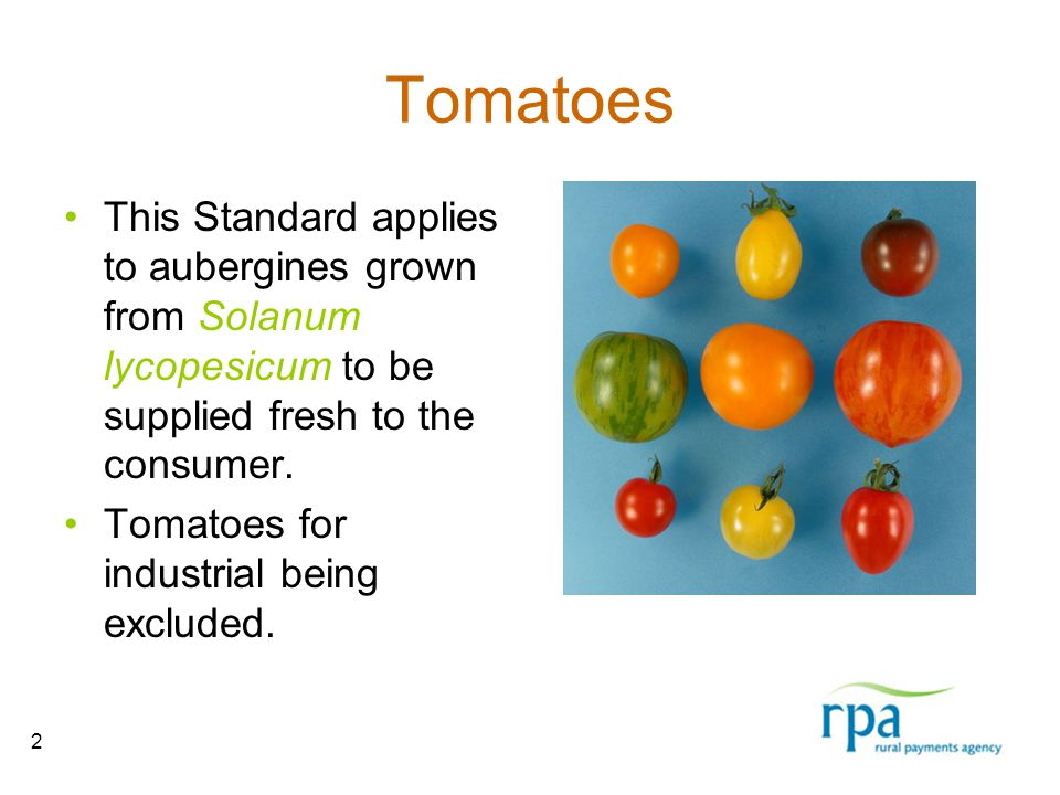 2 Tomatoes This Standard applies to aubergines grown from Solanum lycopesicum to be supplied fresh to the consumer.