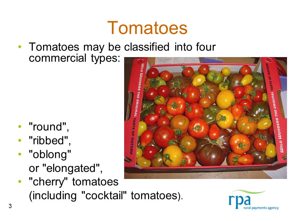 3 Tomatoes Tomatoes may be classified into four commercial types: round , ribbed , oblong or elongated , cherry tomatoes (including cocktail tomatoes ).