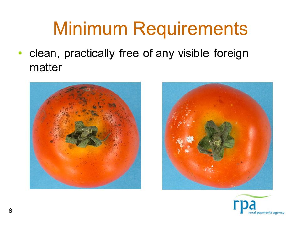 6 Minimum Requirements clean, practically free of any visible foreign matter