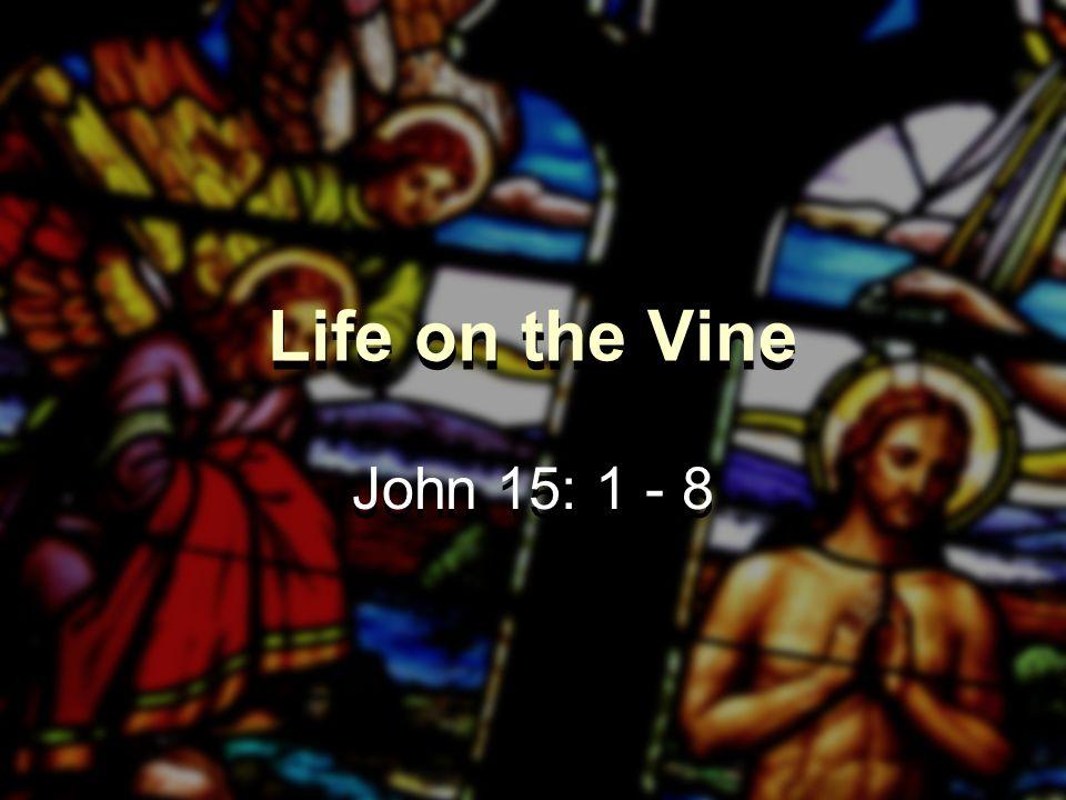 Life on the Vine John 15: 1 - 8