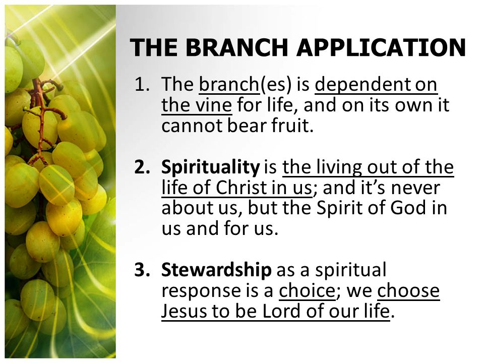 THE FRUIT APPLICATION 1.The bearing of fruit by the branch is a natural expression and outcome of connectedness to the vine.