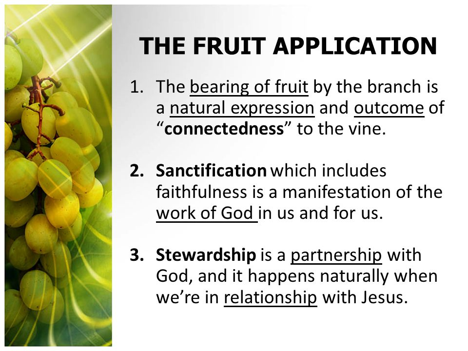 """THE FRUIT APPLICATION 1.The bearing of fruit by the branch is a natural expression and outcome of """"connectedness"""" to the vine. 2.Sanctification which"""