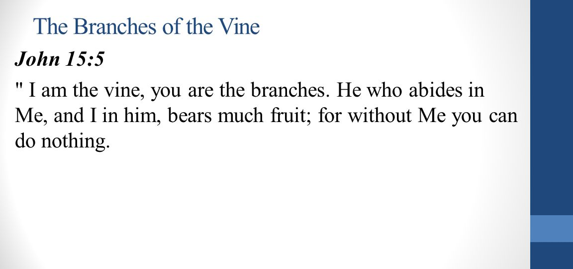 The Branches of the Vine John 15:5 I am the vine, you are the branches.