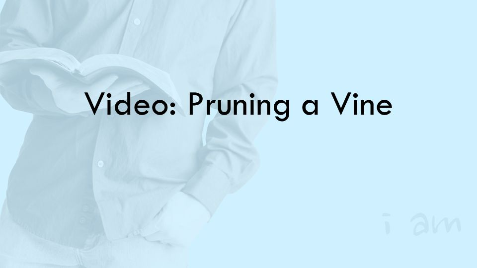 Video: Pruning a Vine