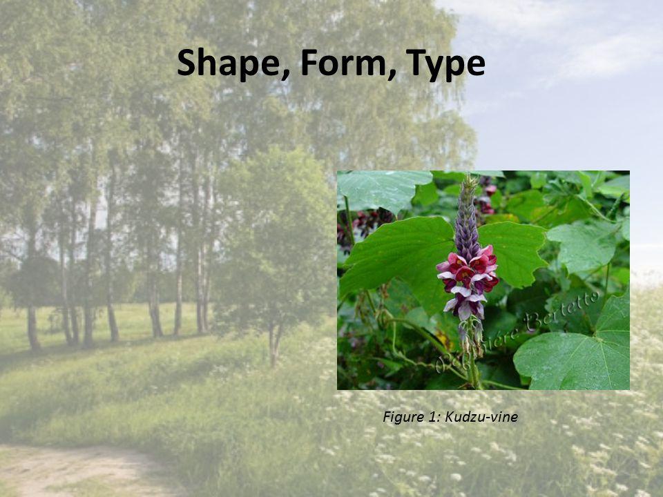 Shape, Form, Type Figure 1: Kudzu-vine http://ww w.pepinie rebertett o.fr/imag es/catalog ue/photo s/photosP Q/Puerari a_lobata.j pg