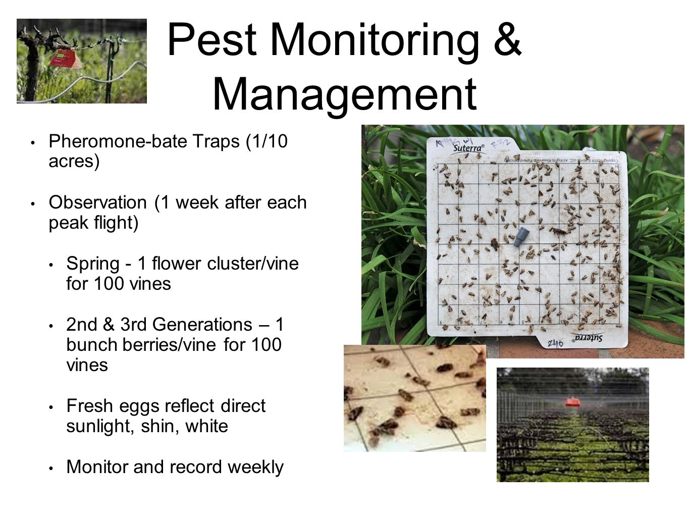 Pest Monitoring & Management Pheromone-bate Traps (1/10 acres) Observation (1 week after each peak flight) Spring - 1 flower cluster/vine for 100 vine