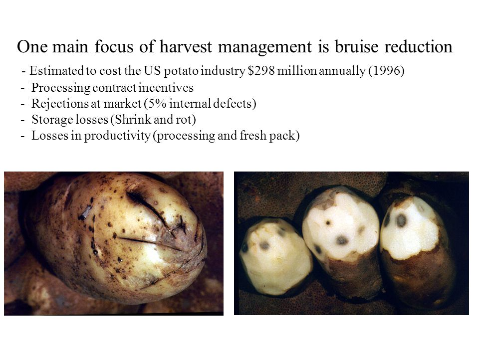 One main focus of harvest management is bruise reduction - Estimated to cost the US potato industry $298 million annually (1996) - Processing contract