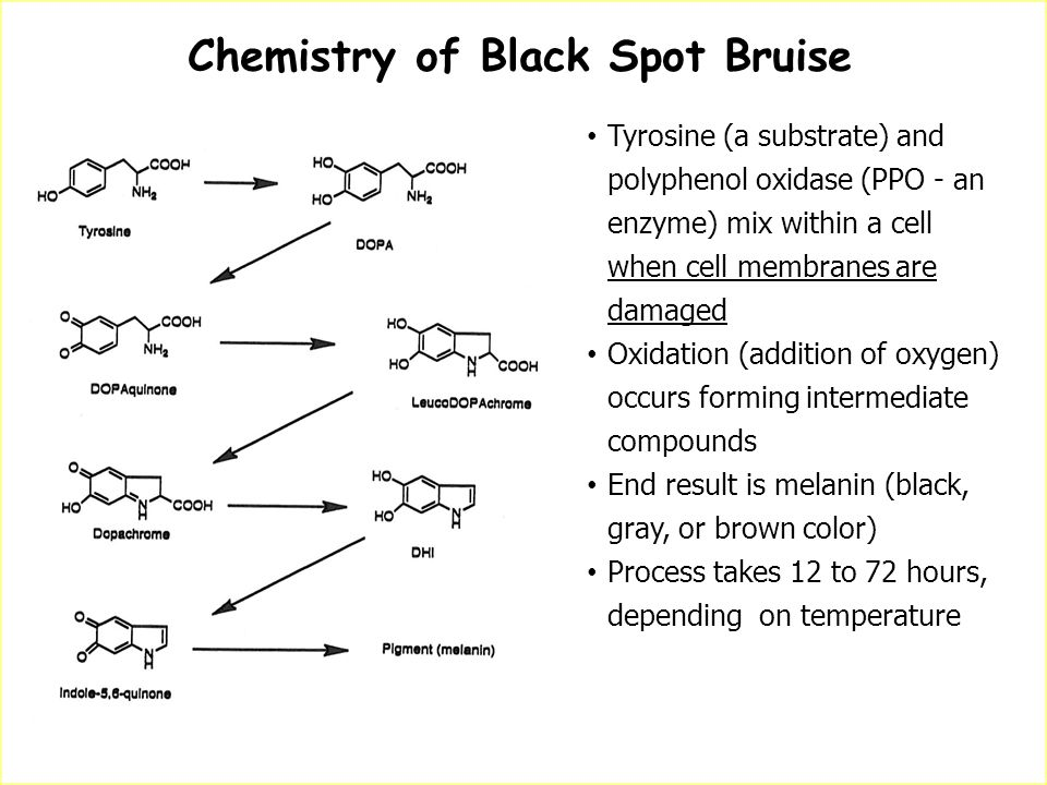Chemistry of Black Spot Bruise Brook, R.C. 1996. Potato Bruising. National Potato Anti-bruise Committee Tyrosine (a substrate) and polyphenol oxidase