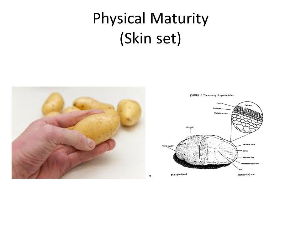 Physical Maturity (Skin set)