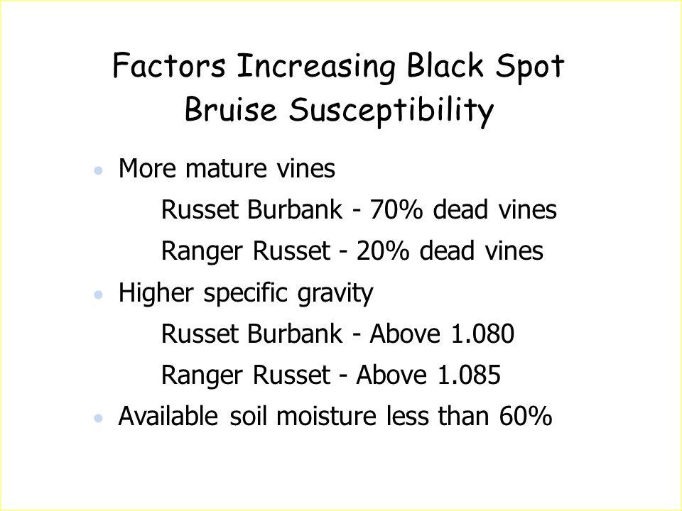 Factors Increasing Black Spot Bruise Susceptibility  More mature vines Russet Burbank - 70% dead vines Ranger Russet - 20% dead vines  Higher specif