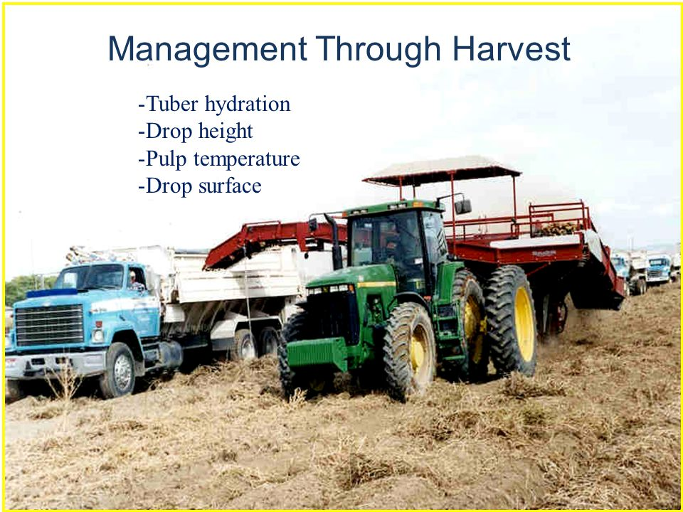 Management Through Harvest -Tuber hydration -Drop height -Pulp temperature -Drop surface