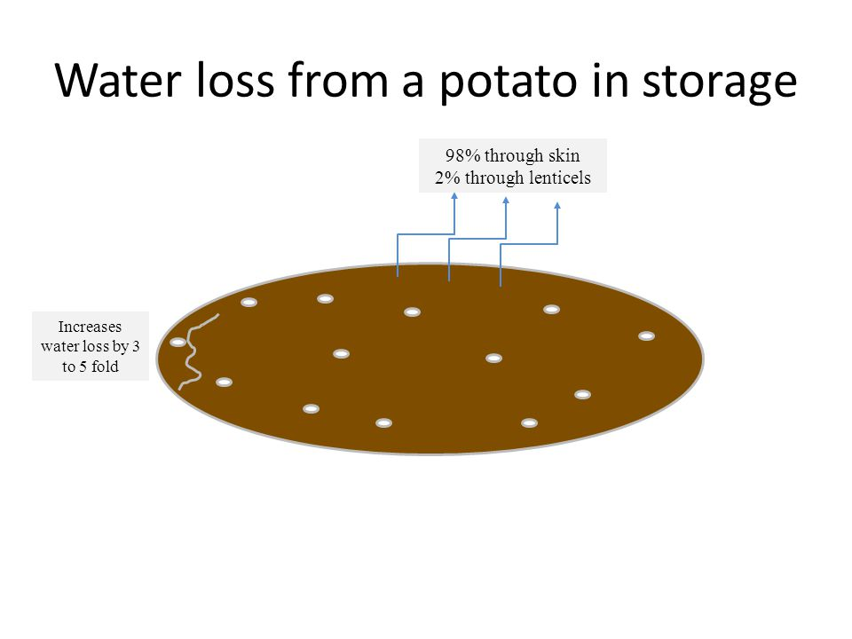 Water loss from a potato in storage 98% through skin 2% through lenticels Increases water loss by 3 to 5 fold