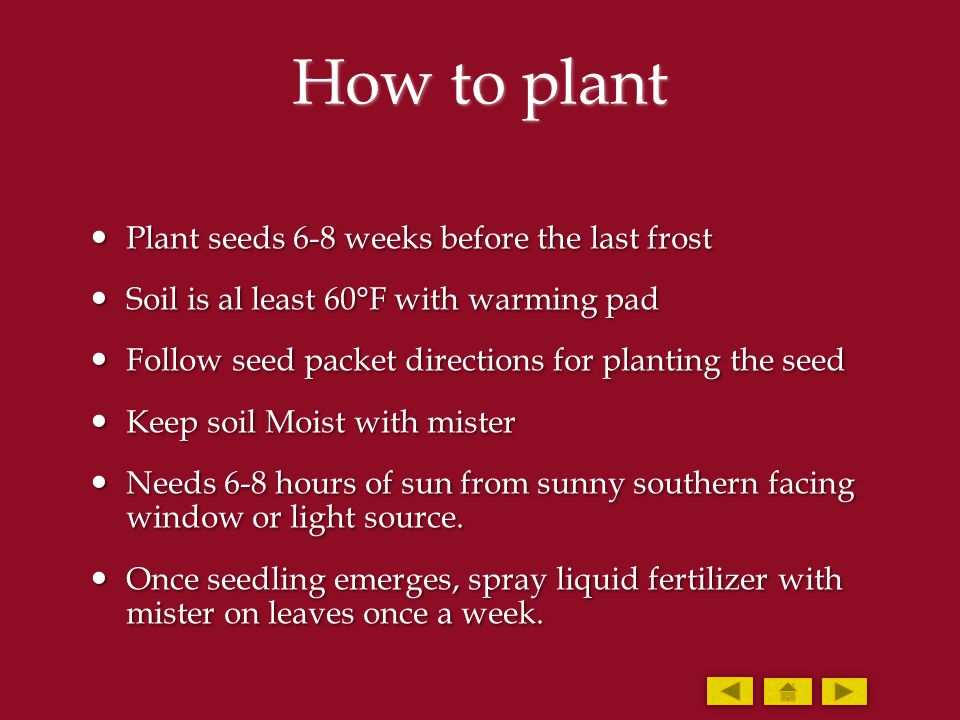 How to plant Plant seeds 6-8 weeks before the last frost Plant seeds 6-8 weeks before the last frost Soil is al least 60°F with warming pad Soil is al