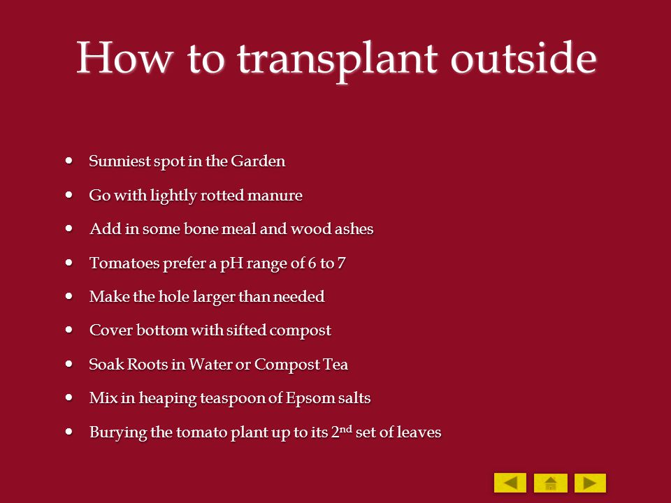 How to transplant outside Sunniest spot in the Garden Sunniest spot in the Garden Go with lightly rotted manure Go with lightly rotted manure Add in s