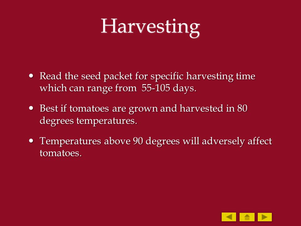 Harvesting Read the seed packet for specific harvesting time which can range from 55-105 days. Read the seed packet for specific harvesting time which