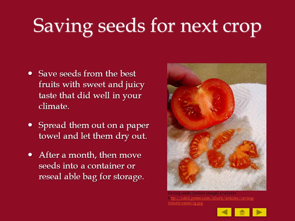 Saving seeds for next crop Save seeds from the best fruits with sweet and juicy taste that did well in your climate. Save seeds from the best fruits w