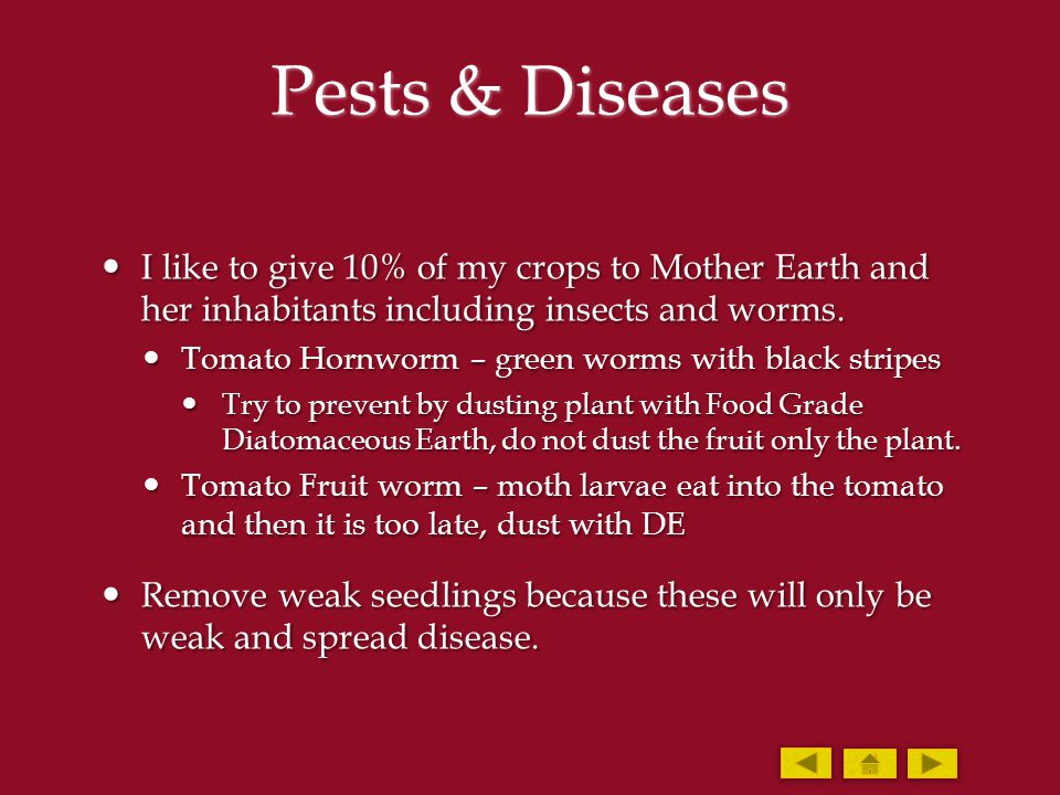 Pests & Diseases I like to give 10% of my crops to Mother Earth and her inhabitants including insects and worms. I like to give 10% of my crops to Mot