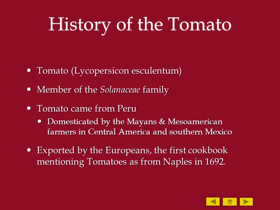 History of the Tomato Tomato (Lycopersicon esculentum) Tomato (Lycopersicon esculentum) Member of the Solanaceae family Member of the Solanaceae famil