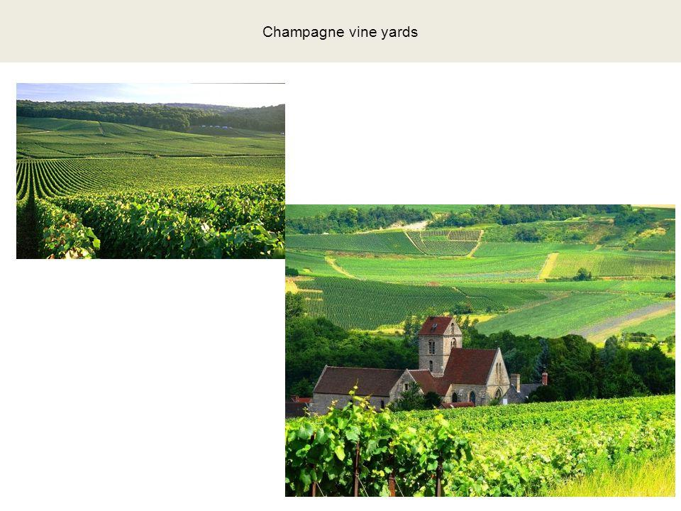 Champagne vine yards