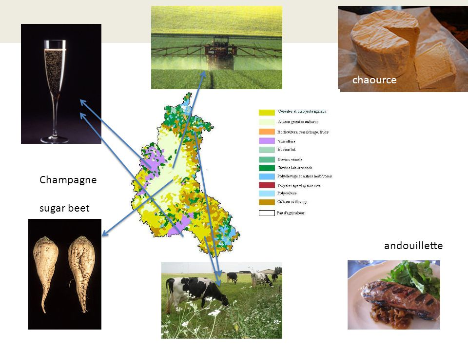 agriculture Champagne sugar beet andouillette chaource agriculture