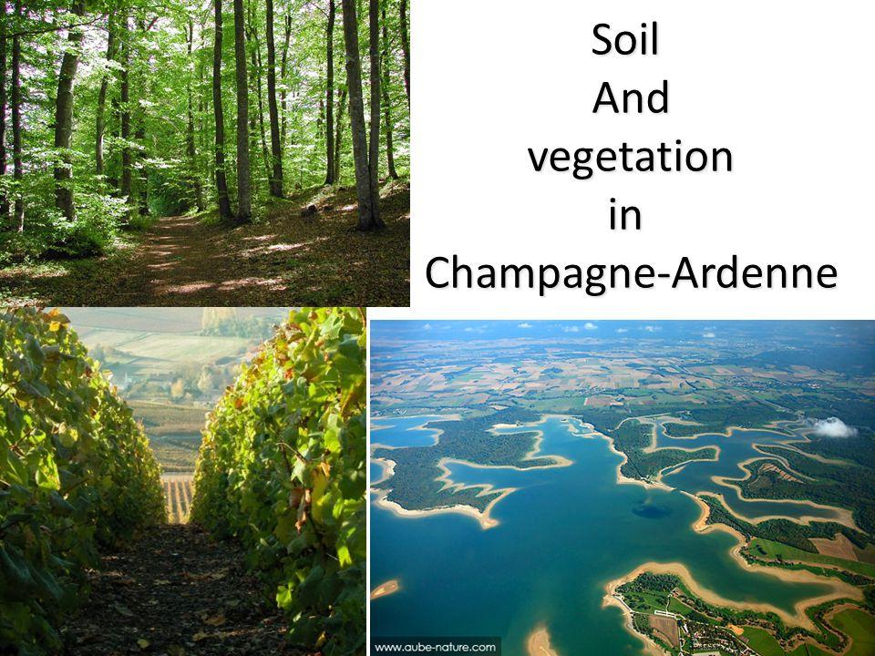 SoilAnd vegetation vegetationinChampagne-Ardenne