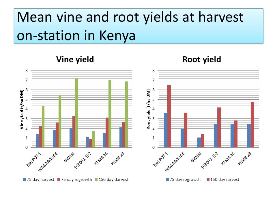 Mean vine and root yields at harvest on-station in Kenya Vine yieldRoot yield