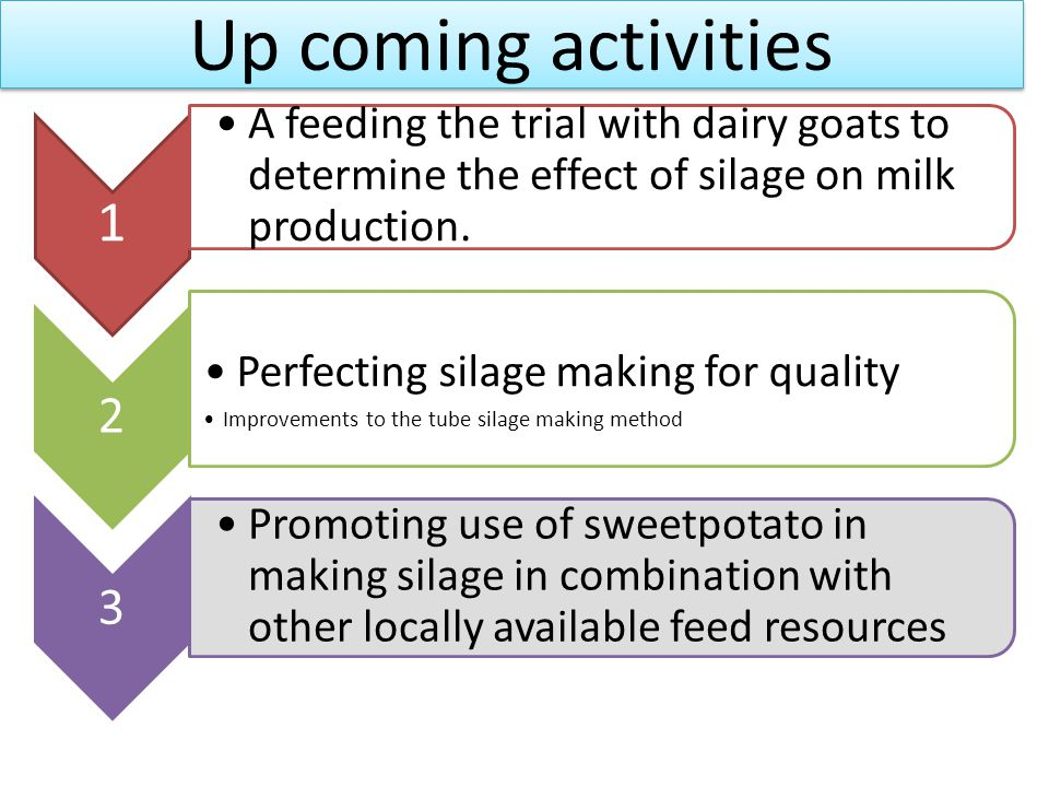 Up coming activities 1 A feeding the trial with dairy goats to determine the effect of silage on milk production. 2 Perfecting silage making for quali