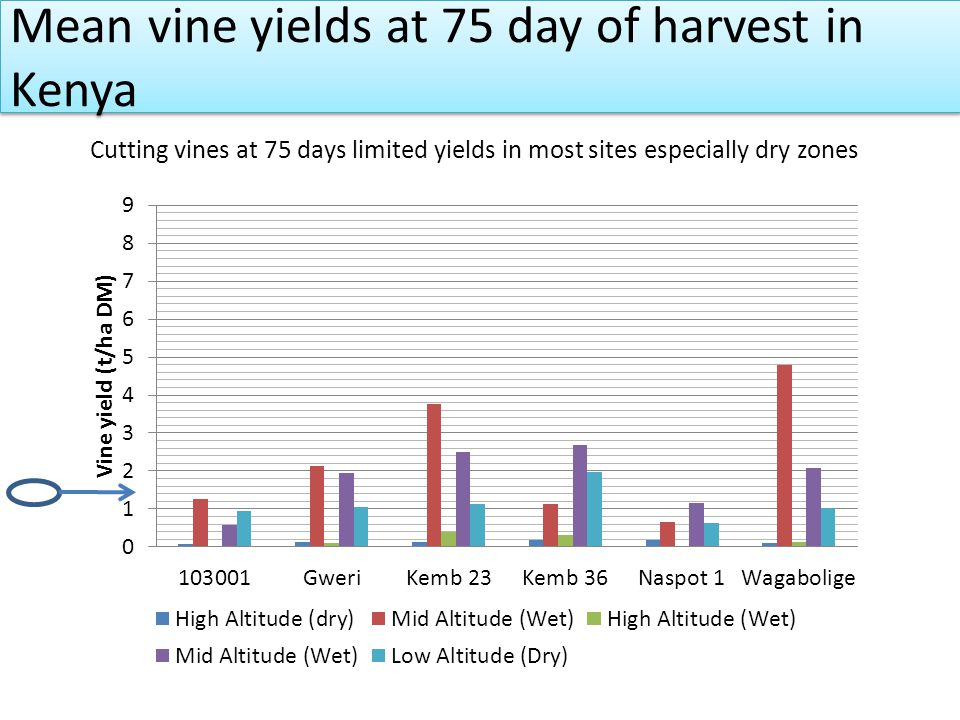 Mean vine yields at 75 day of harvest in Kenya Cutting vines at 75 days limited yields in most sites especially dry zones corrective action required