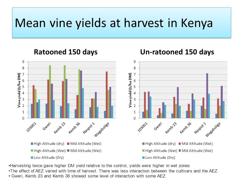 Mean vine yields at harvest in Kenya Ratooned 150 daysUn-ratooned 150 days Harvesting twice gave higher DM yield relative to the control, yields were
