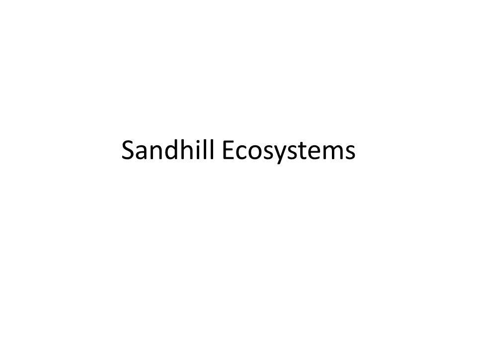 Sandhill Ecosystems