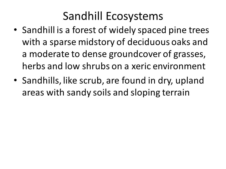 Sandhill is a forest of widely spaced pine trees with a sparse midstory of deciduous oaks and a moderate to dense groundcover of grasses, herbs and low shrubs on a xeric environment Sandhills, like scrub, are found in dry, upland areas with sandy soils and sloping terrain