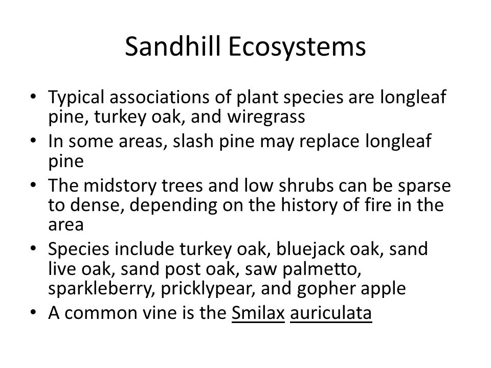 Sandhill Ecosystems Typical associations of plant species are longleaf pine, turkey oak, and wiregrass In some areas, slash pine may replace longleaf pine The midstory trees and low shrubs can be sparse to dense, depending on the history of fire in the area Species include turkey oak, bluejack oak, sand live oak, sand post oak, saw palmetto, sparkleberry, pricklypear, and gopher apple A common vine is the Smilax auriculata