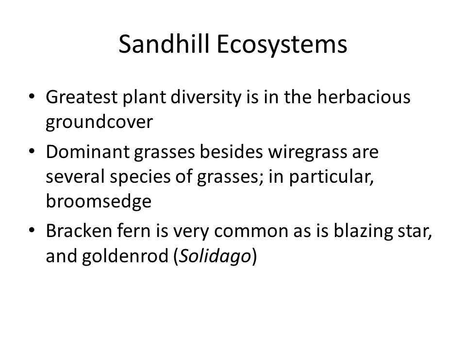 Sandhill Ecosystems Greatest plant diversity is in the herbacious groundcover Dominant grasses besides wiregrass are several species of grasses; in particular, broomsedge Bracken fern is very common as is blazing star, and goldenrod (Solidago)