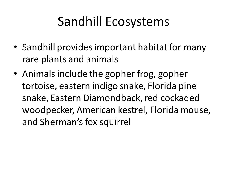 Sandhill Ecosystems Sandhill provides important habitat for many rare plants and animals Animals include the gopher frog, gopher tortoise, eastern ind