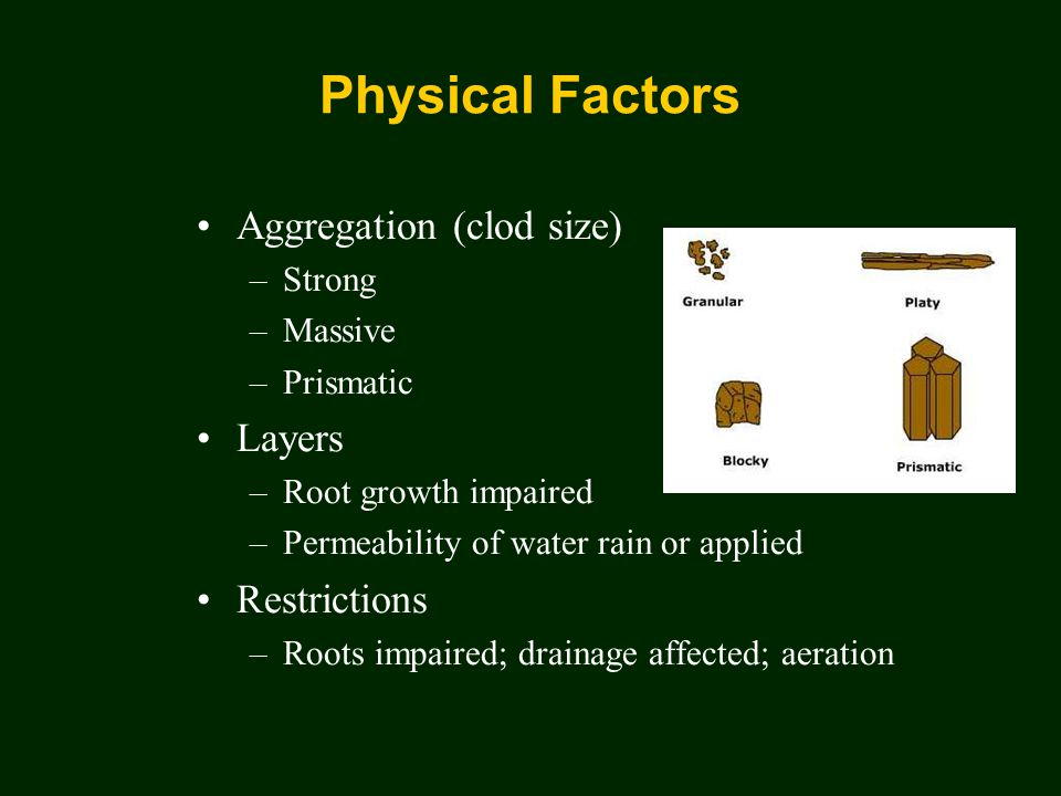 Physical Factors Aggregation (clod size) –Strong –Massive –Prismatic Layers –Root growth impaired –Permeability of water rain or applied Restrictions –Roots impaired; drainage affected; aeration