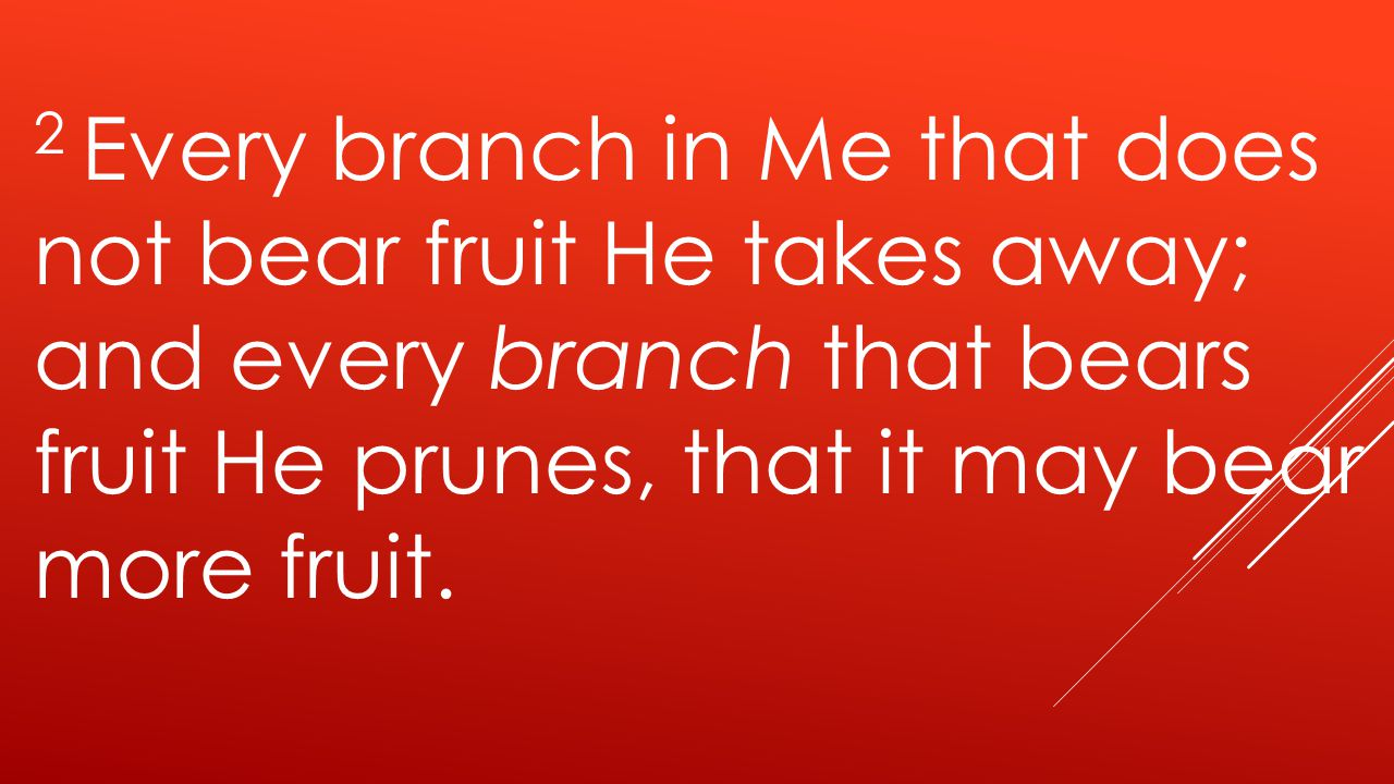 2 Every branch in Me that does not bear fruit He takes away; and every branch that bears fruit He prunes, that it may bear more fruit.