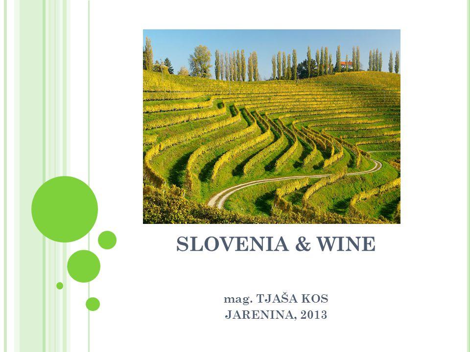 SLOVENIA & WINE mag. TJAŠA KOS JARENINA, 2013