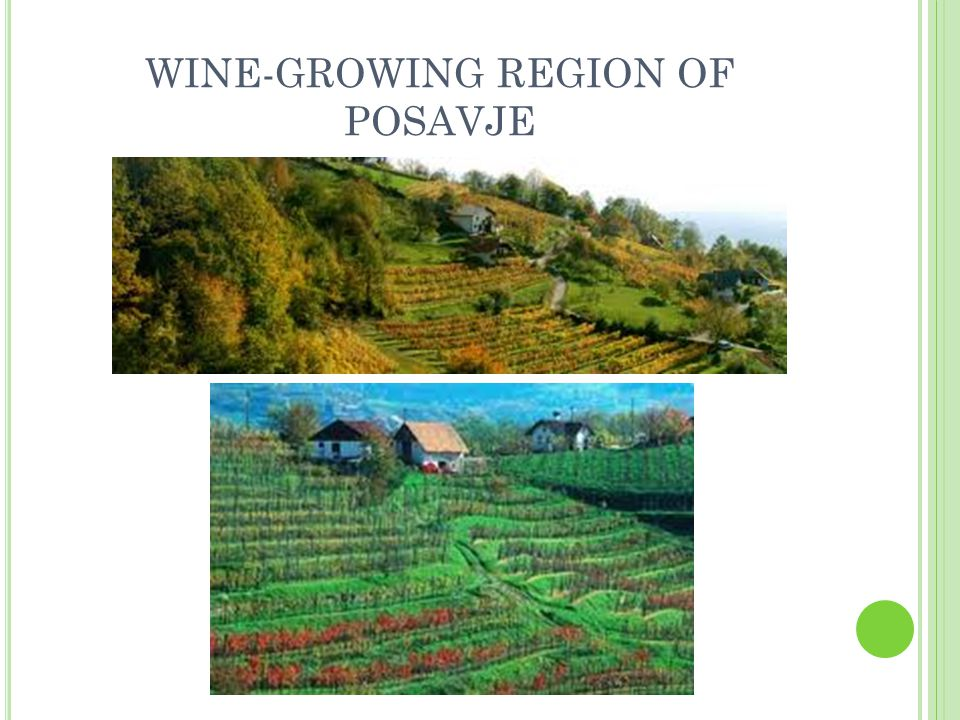 WINE-GROWING REGION OF POSAVJE