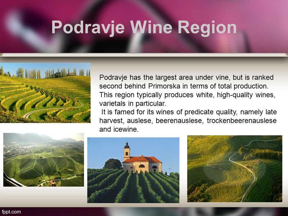 Podravje Wine Region Podravje has the largest area under vine, but is ranked second behind Primorska in terms of total production.