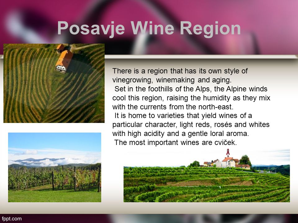 Posavje Wine Region There is a region that has its own style of vinegrowing, winemaking and aging.