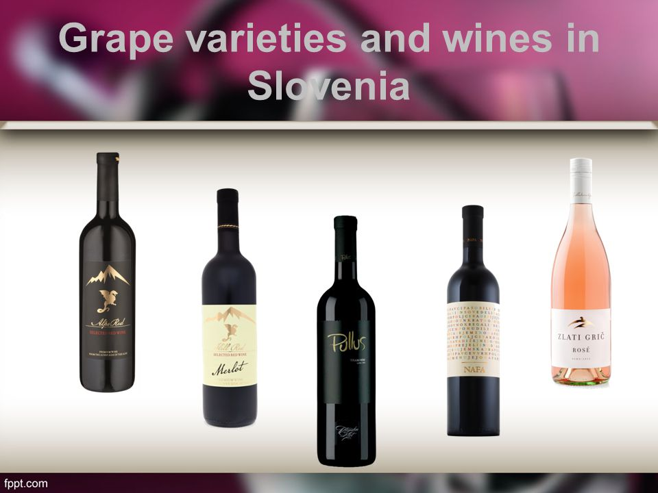 Grape varieties and wines in Slovenia