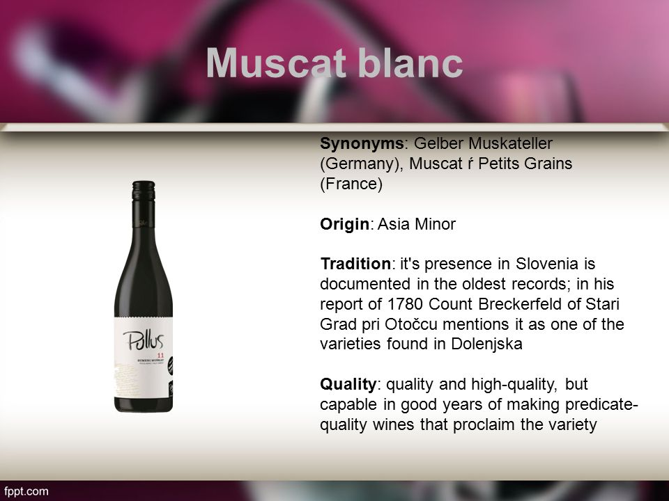 Muscat blanc Synonyms: Gelber Muskateller (Germany), Muscat ŕ Petits Grains (France) Origin: Asia Minor Tradition: it s presence in Slovenia is documented in the oldest records; in his report of 1780 Count Breckerfeld of Stari Grad pri Otočcu mentions it as one of the varieties found in Dolenjska Quality: quality and high-quality, but capable in good years of making predicate- quality wines that proclaim the variety