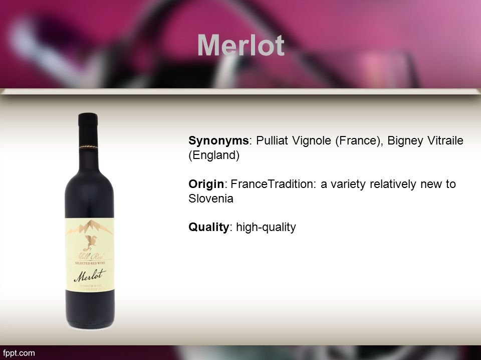 Merlot Synonyms: Pulliat Vignole (France), Bigney Vitraile (England) Origin: FranceTradition: a variety relatively new to Slovenia Quality: high-quality