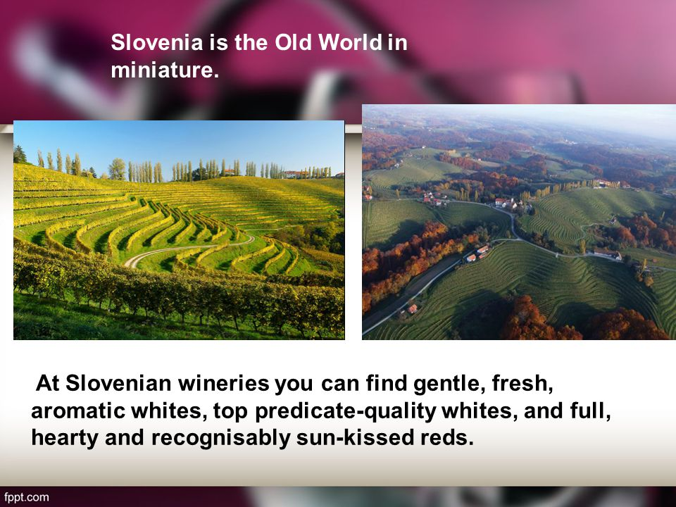 At Slovenian wineries you can find gentle, fresh, aromatic whites, top predicate-quality whites, and full, hearty and recognisably sun-kissed reds.