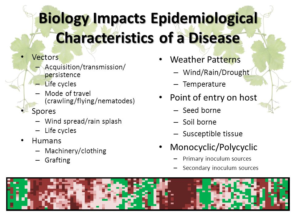 Biology Impacts Epidemiological Characteristics of a Disease Vectors – Acquisition/transmission/ persistence – Life cycles – Mode of travel (crawling/flying/nematodes) Spores – Wind spread/rain splash – Life cycles Humans – Machinery/clothing – Grafting Weather Patterns – Wind/Rain/Drought – Temperature Point of entry on host – Seed borne – Soil borne – Susceptible tissue Monocyclic/Polycyclic – Primary inoculum sources – Secondary inoculum sources
