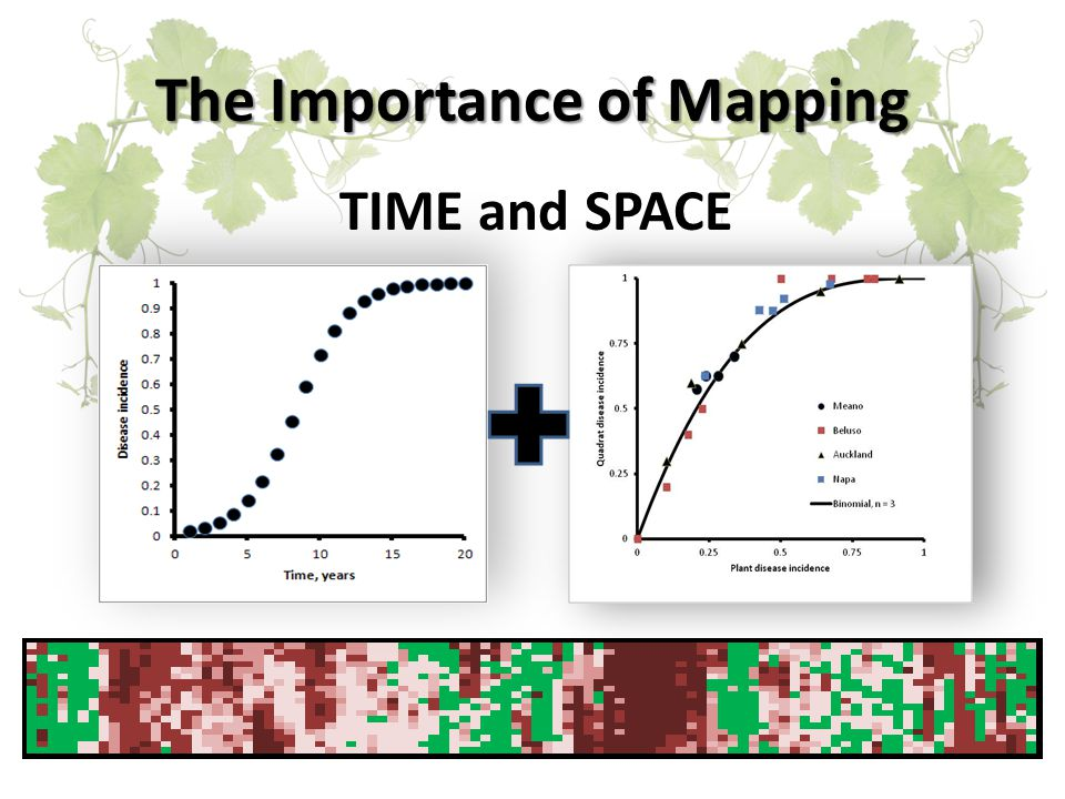 Epidemiology TIME  % INCIDENCE  Random Introduction of Infection Events (Wind, machinery etc) neighboring blocks matter*0%-5% Aggregation Stage, spread is predominantly within the block, with small levels of random infection events25%-50%+ Random Infections and Aggregated Infections less successful*, great source of inoculum70%+