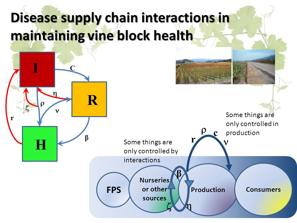 Disease supply chain interactions in maintaining vine block health I R H r  C   β FPS Nurseries or other sources Production Consumers r  c Some things are only controlled in production β   Some things are only controlled by interactions