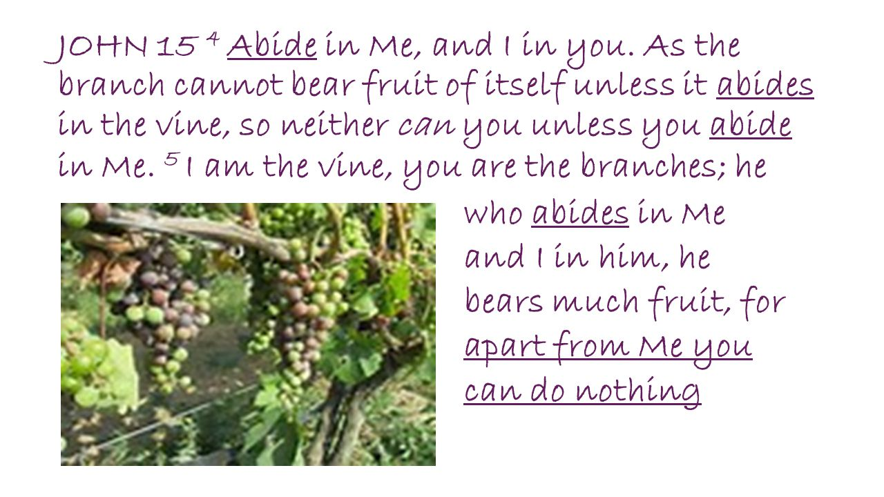 JOHN 15 4 Abide in Me, and I in you. As the branch cannot bear fruit of itself unless it abides in the vine, so neither can you unless you abide in Me