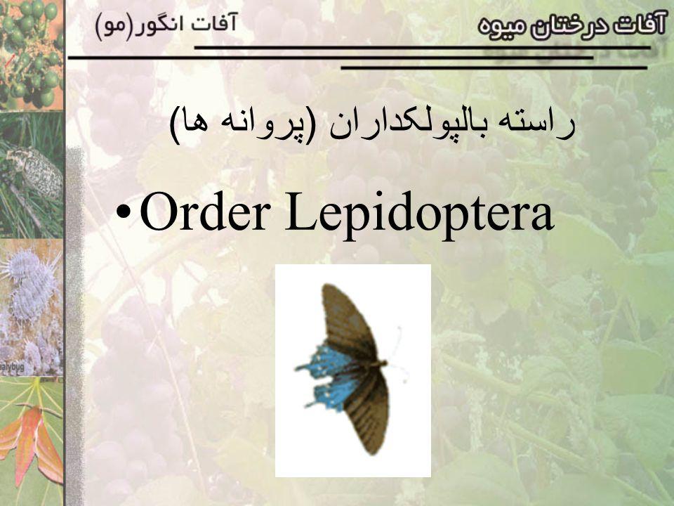 راسته بالپولکداران (پروانه ها) Order Lepidoptera